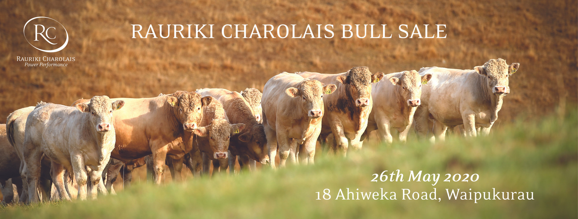 Facebook Cover Photo for Rauriki Charolais.