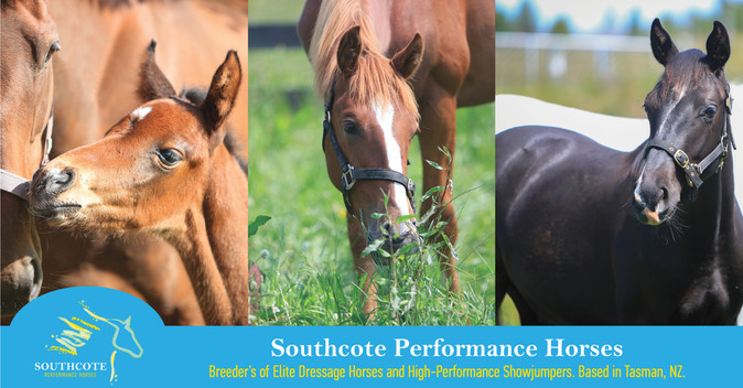 Facebook cover photo for Southcote Performance Horses.