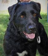Loving Paws 2021-06 Dogs18.JPG