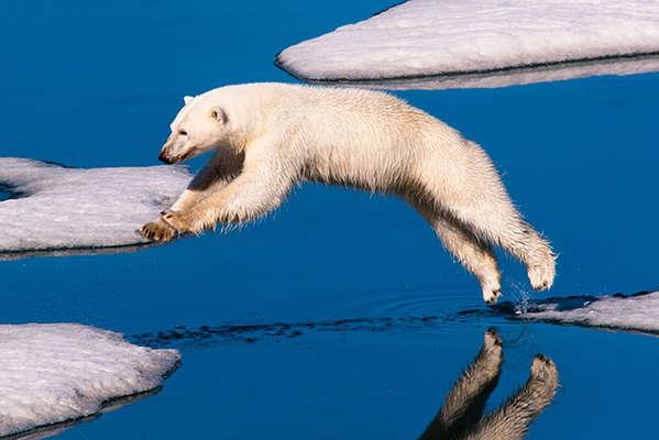 Polar-Bears-3-8923-3.jpg