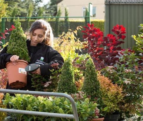 Brexit: Gardening trade faces import rule change costs