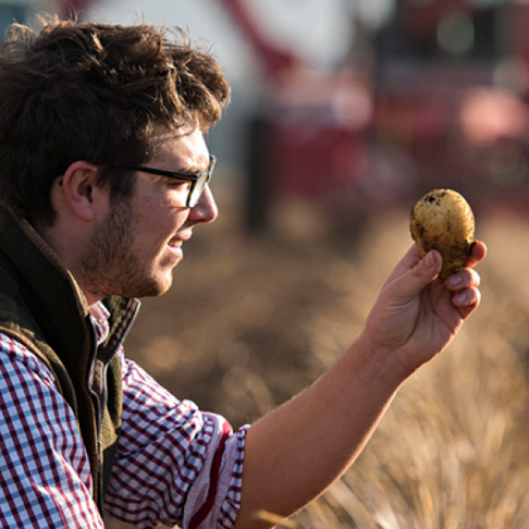 Anything could still happen in the European potato season