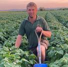Seaweed-based biostimulant helping potato growers stay cool