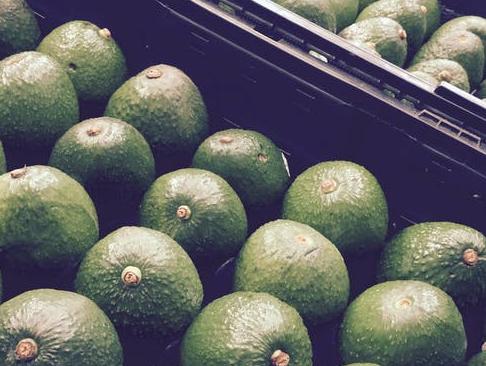 Spanish avocado season to see higher volumes