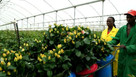 New Kenya horticulture levy to fund fumigation facility