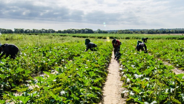 Human traffickers 'diversifying into agriculture'