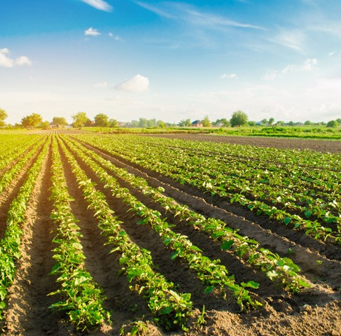 Majority of UK farmers believe their farms will be climate neutral by 2035