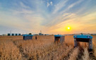 Google launches autonomous robot to analyse farms with artificial intelligence