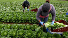 Ongoing need for migrant workers but what do the new rules mean?