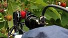 Bosch UK to work with Fieldwork Robotics to optimise robot crop harvesting technology