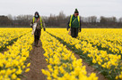"""Lincolnshire flower grower's desperate plea to scrap """"farcical"""" rules on EU workers"""