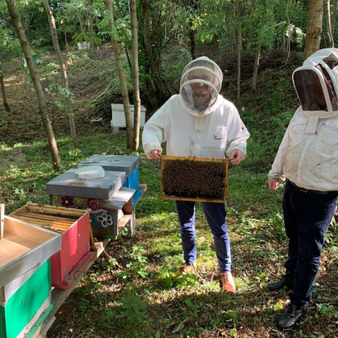 AgriSound in talks with big businesses in bid to save bees