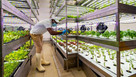 Vertical farming could feed the world, but it depends on the cheapest lightbulb