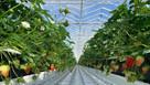 Inside Sir James Dyson's £110 million farm of the future