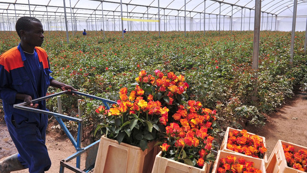 Kenya intends to grow horticulture exports by 10 percent