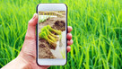 UK companies explore Agritech opportunities in Costa Rica