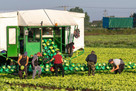 Veg pickers 'paid £20 an hour' thanks to Brexit and Covid