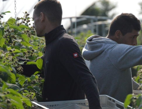 'The UK government must arrive quickly at a decision' on seasonal workers