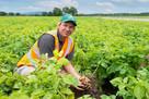 Potato grower makes huge efficiencies with mobile app