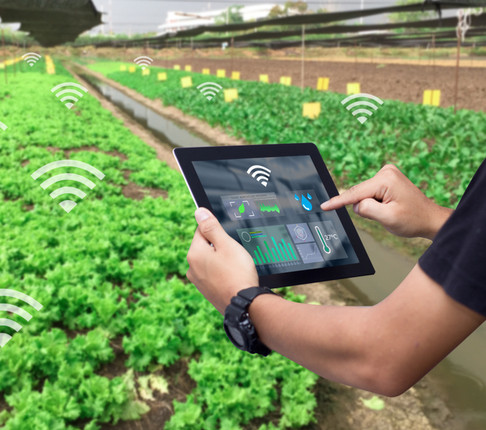 Digital pest and disease risk indicator launched for farmers