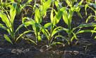 Organic fertilisers found to reduce risk of foodborne pathogens