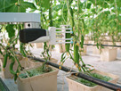Farms consider investing in robotics to fill crucial seasonal labour gaps