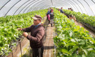 Anger over farm labour scheme 'sabotage'