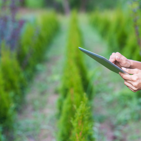 Tyfu Cymru takes plant health online