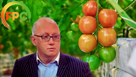 'Huge additional burden' on tomatoes, cucumbers and peppers growers, says FPC's Nigel Jenney