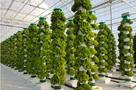 Vertical Farming: How Big Is Too Big?