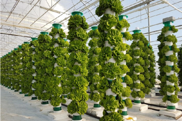 Vertical Farming: How Big Is Too Big?