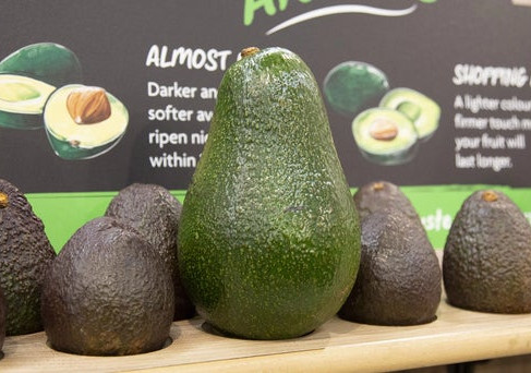 Morrisons brings back 1kg avocados
