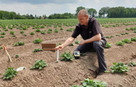 New insights into potato crop development during extreme weather conditions