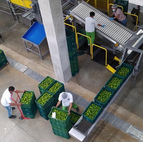 La Dona Fruit opens pioneering packhouse