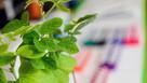 Gene editing: First major step towards using technique in British farming