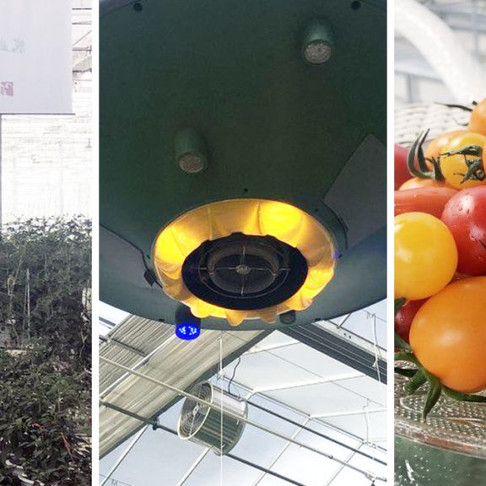 China turns to 5G 'smart farms' to boost tomato crops