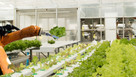 UK agritech could reap rich harvest from investors