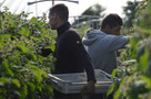 Growers 'increasingly concerned' of staff shortages