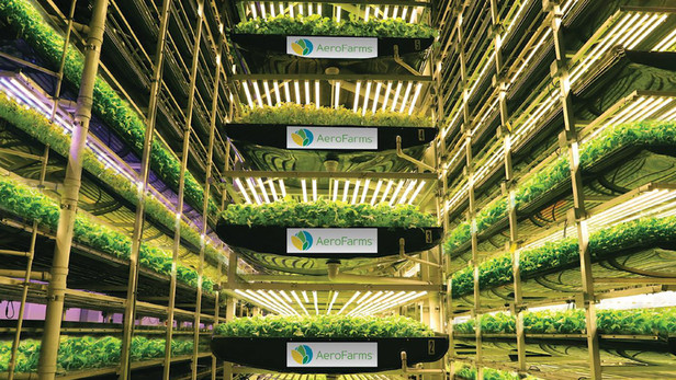 Opinion: Bring on the post-Brexit vertical farming revolution