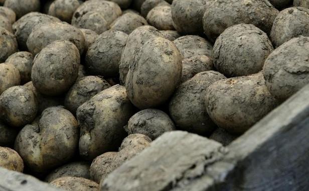Strong start for UK 2020/21 fresh potato exports