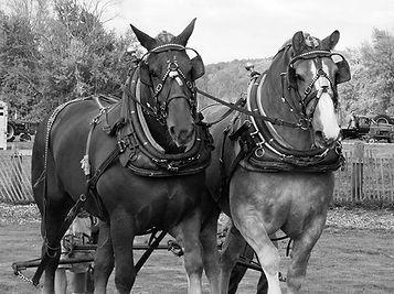 HorsePullB.jpg