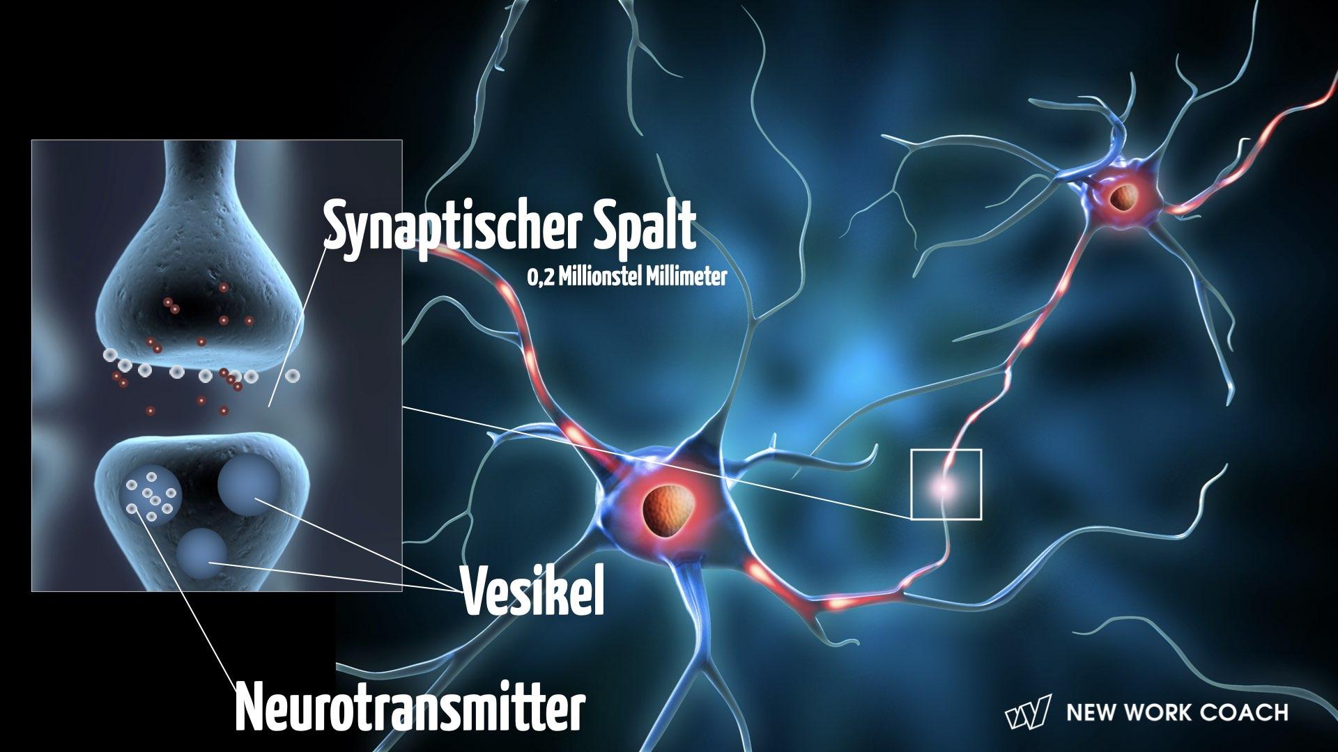 wahrnehmungsprozesse-neurobiologische-gr