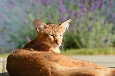 Katzenfotografie Susanne Wolf