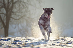 Hundefotografie Susanne Wolf