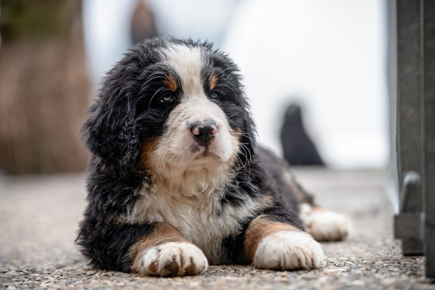 Hundeshooting.jpg