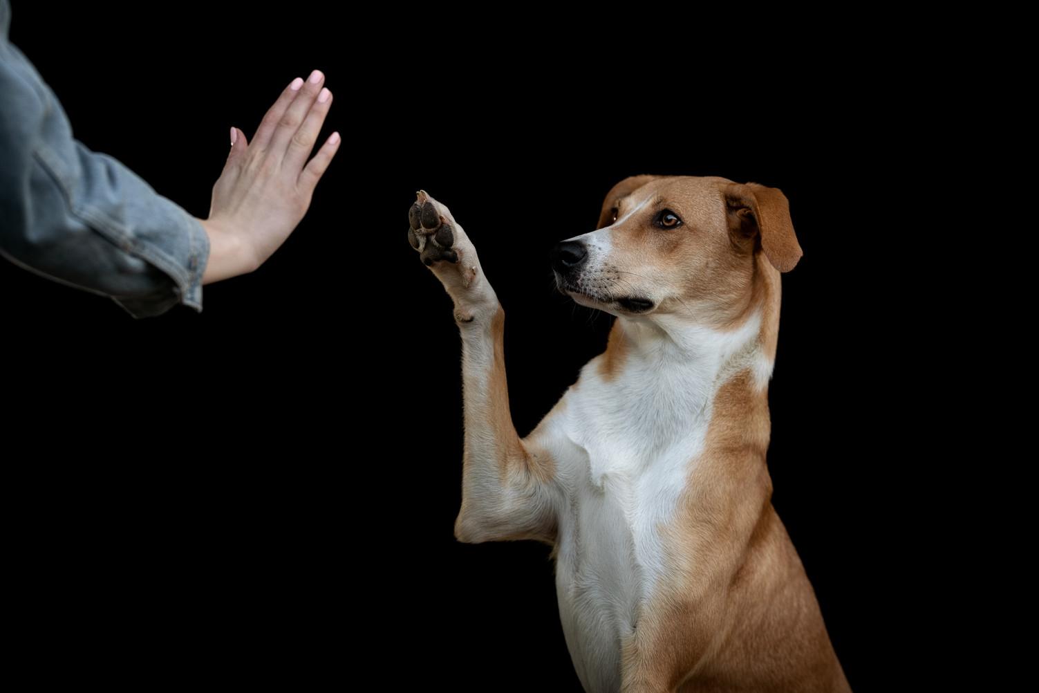 Hundefotografie.jpg