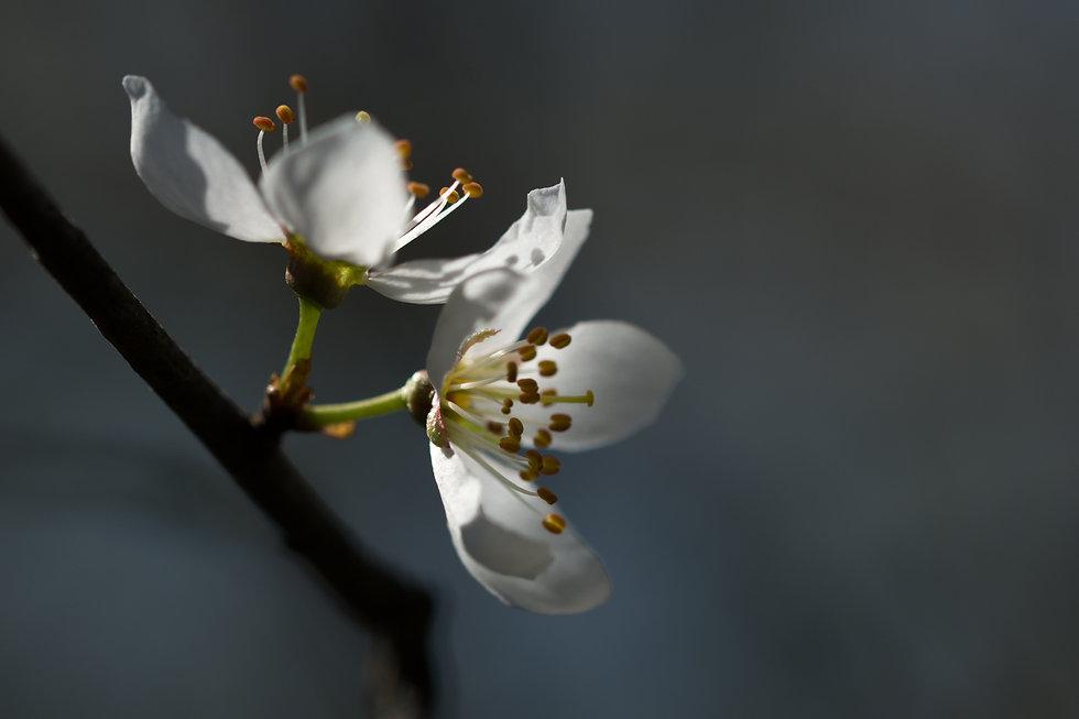 Makrofotografie Susanne Wolf