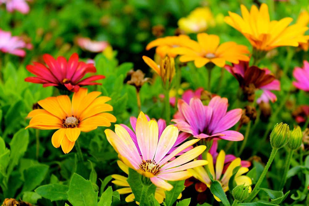 Flores para tu jardin MIC Multiservicios