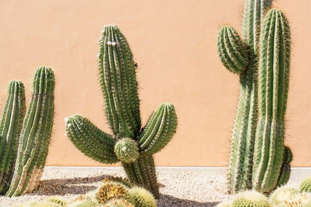 Jardín desertico MIC Multiservicios