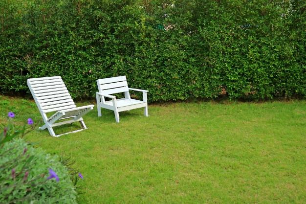 Muro verde para tu jardin MIC Multiservicios